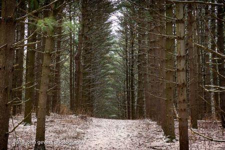 Thoreau Woods 161 • Steuben County, Indiana