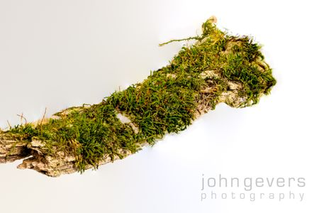 Mossy Branch 2-1