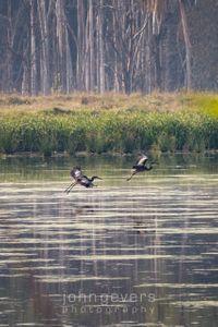 Eagle Marsh 8-21-21-148