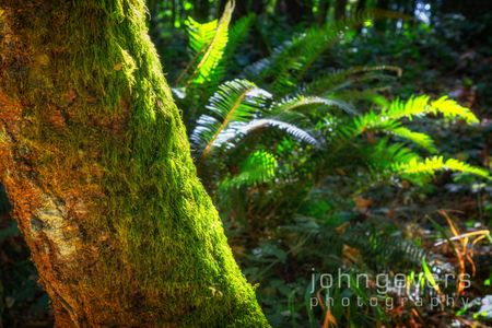 Forest Park-17-Edit-2.jpg