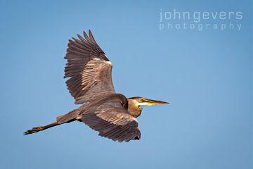 Eagle Marsh 5-30-2020-286