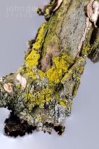 Mossy Branch 1-1