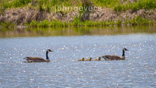Eagle Marsh 5-1-2020-219