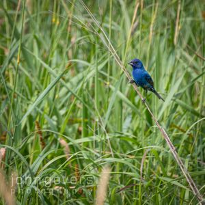 Eagle Marsh 7.7.19-283