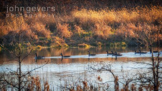Eagle Marsh-12.3.17-25