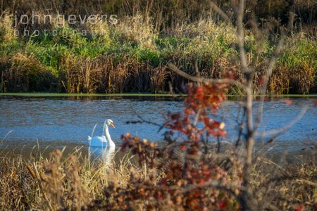 Eagle Marsh 11-11-16-26
