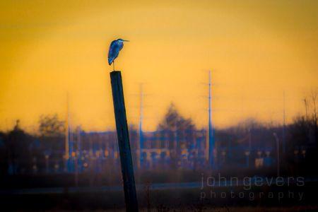 Eagle Marsh-12.3.17-111