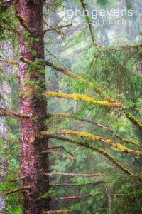 OregonCoast-20-Edit-2.jpg