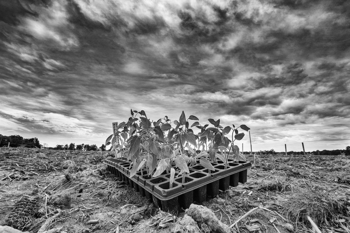 WoodFarmsProducePlanting2017-299-Edit-Edit.jpg