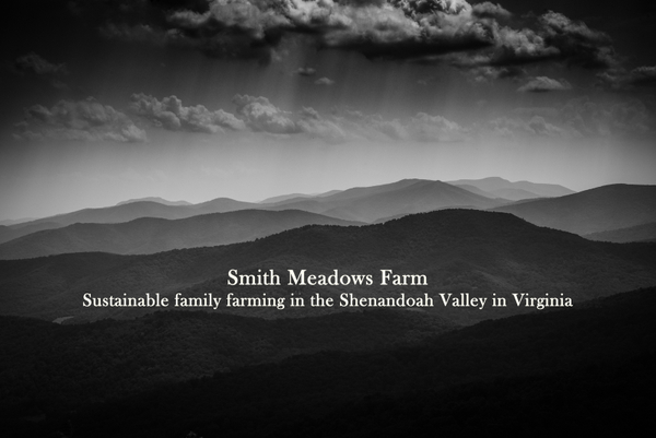 Smith_Meadows_Shenandoah_July_2017-9.jpg