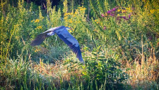 Eagle Marsh 8-21-21-90