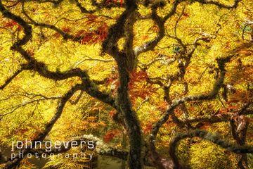 PortlandJapaneseGarden-122-Edit.jpg