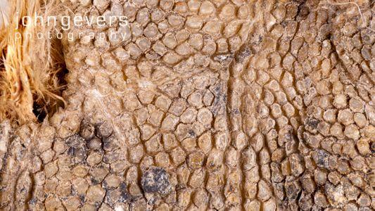 Great Horned Owl foot bottom 2