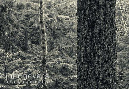 OregonCoast-62-Edit-Edit.jpg