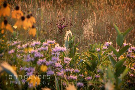Eagle Marsh Summer Morning 6 • Fort Wayne, Indiana