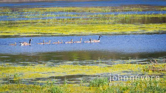 Eagle Marsh 6-5-17-57
