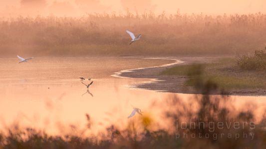 Eagle Marsh 9-26-20-94h