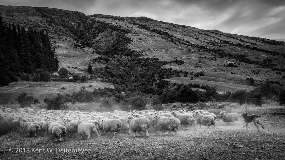 Glenariffe_B&W_19_Dec_2017_(3_of_24).jpg