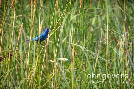 Eagle Marsh 7.7.19-171