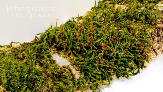 Mossy Branch 2-2