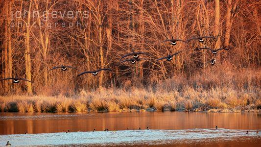 Eagle Marsh 1-1-20-87