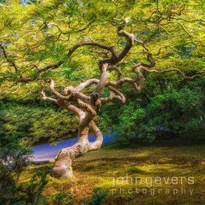 PortlandJapaneseGarden-109-Edit.jpg