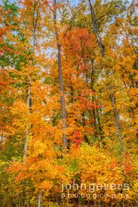 Indiana Autumn Blaze 2 • Fort Wayne, Indiana