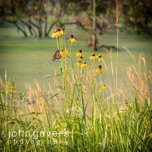 Eagle Marsh Summer Morning 53 • Fort Wayne, Indiana