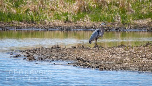 Eagle Marsh 5-1-2020-222