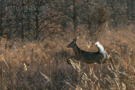 Eagle Marsh-12.3.17-71