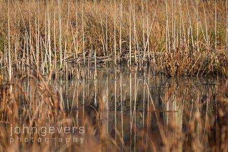 Eagle Marsh-12.3.17-13