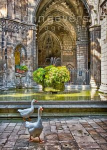 Cloister of Barcelona Cathedral • Catalonia, Spain