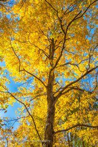 Autumn Drape 1 • Vandolah Acres Preserve • Fort Wayne, Indiana
