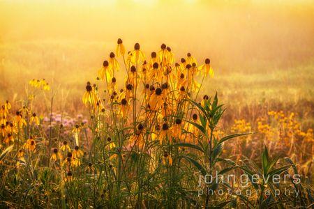 Eagle Marsh Summer Morning 13 • Fort Wayne, Indiana