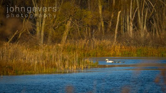 Eagle Marsh 11-11-16-69