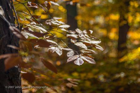 Autumn Glint • Vandolah Acres Preserve • Fort Wayne, Indiana