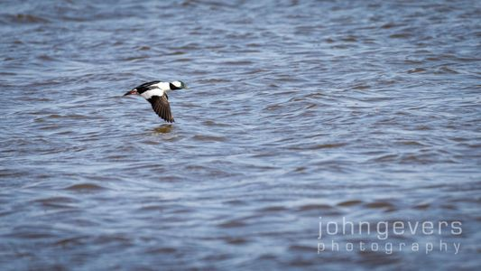 Eagle Marsh 3-27-2021 -143