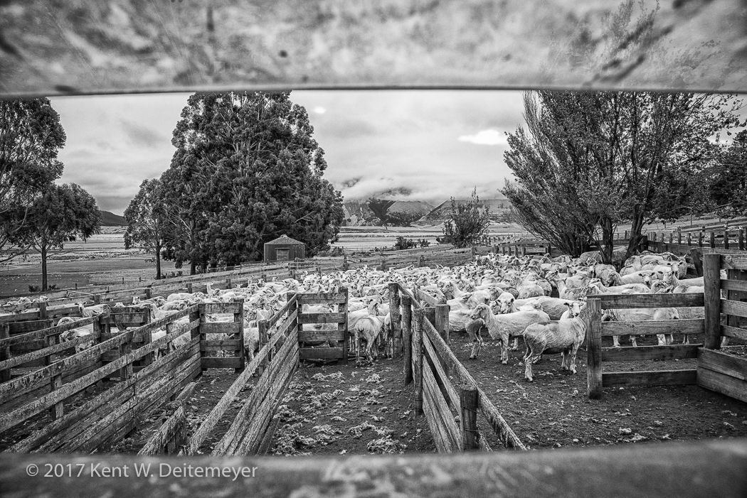 Glenariffe_Shearing_Day-2.jpg