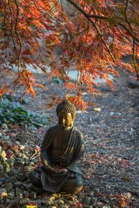 Buddha Serenity 2 • Fort Wayne, Indiana
