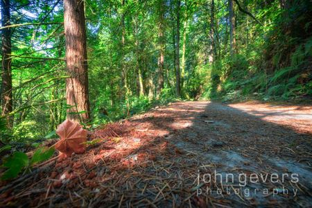 Forest Park-25-Edit-2.jpg