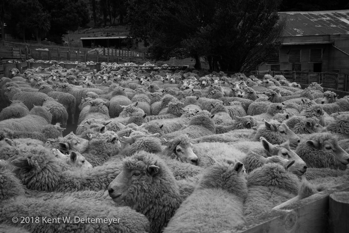 Glenariffe_B&W_19_Dec_2017_(6_of_24).jpg
