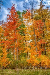 Indiana Autumn Blaze 1 • Fort Wayne, Indiana