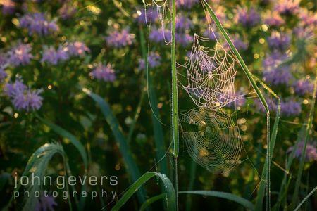 Eagle Marsh Summer Morning 24 • Fort Wayne, Indiana