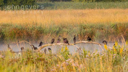 Eagle Marsh 7.25.19-65