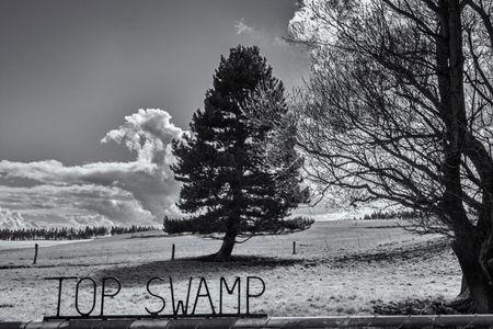 Top Swamp