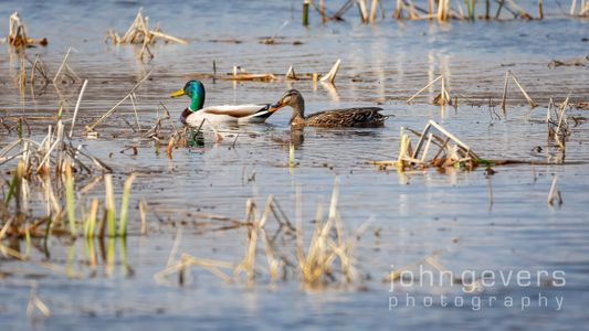 Eagle Marsh 3-27-2021 -201