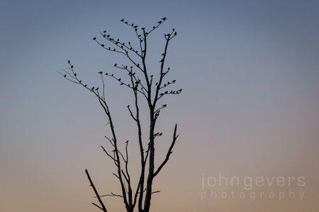 Eagle Marsh 11-11-16-155