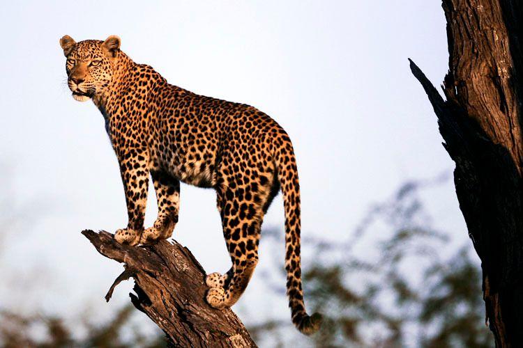 1r2011_africa_slideshow_817.jpg