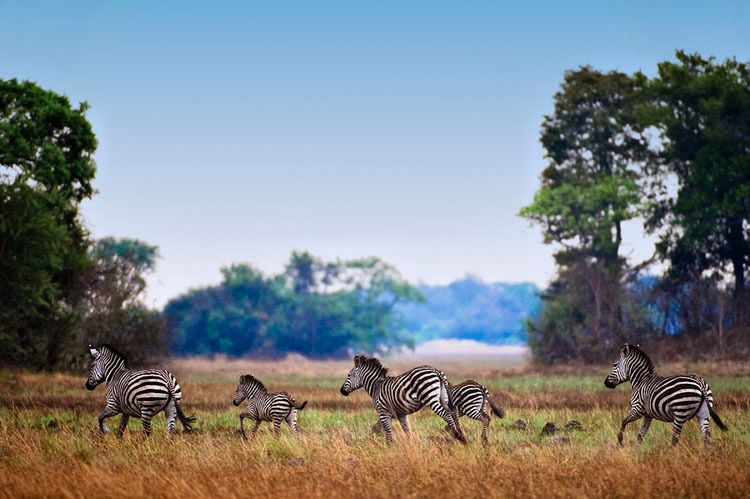 1BR_AfricaOctober015_j.jpg