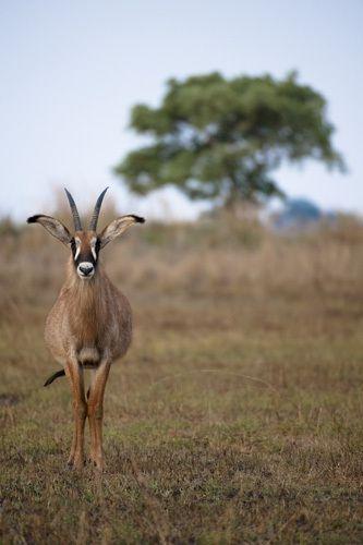 1BR_AfricaOctober010_j.jpg